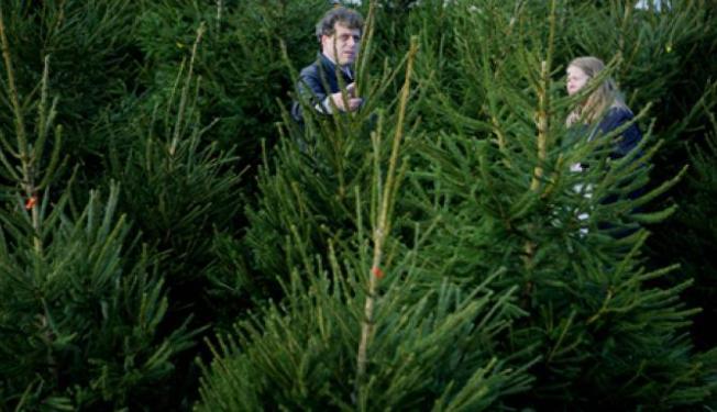 kerstboom-1112
